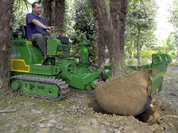 mutare extractie plante copaci